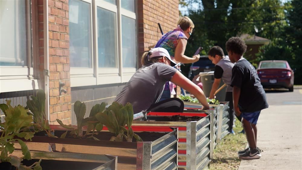 Students at Salem Elementary school plant lettuce for their teaching garden.